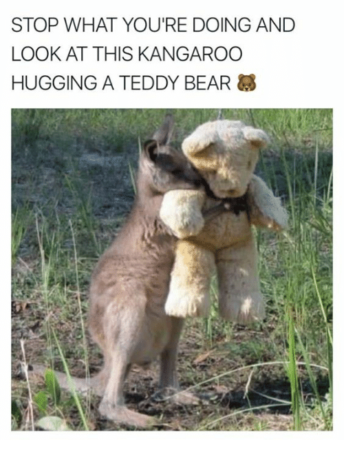https://pics.me.me/stop-what-youre-doing-and-look-at-this-kangaroo-hugging-24610568.png