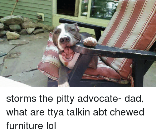 Storms The Pitty Advocate  Dad What Are Ttya Talkin Abt Chewed Furniture  Lol | Dad Meme On Me.me