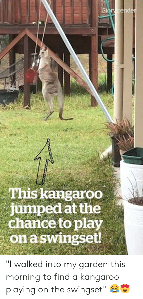 "Jumped, Kangaroo, and Play: Story trender  This kangaroo  jumped at the  chance to play  on aswingset! ""I walked into my garden this morning to find a kangaroo playing on the swingset"" 😂😍"