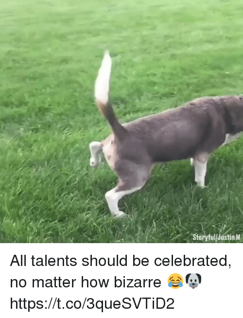 Memes, Bizarre, and Celebrated: Storyful/Justin M All talents should be celebrated, no matter how bizarre 😂🐶 https://t.co/3queSVTiD2