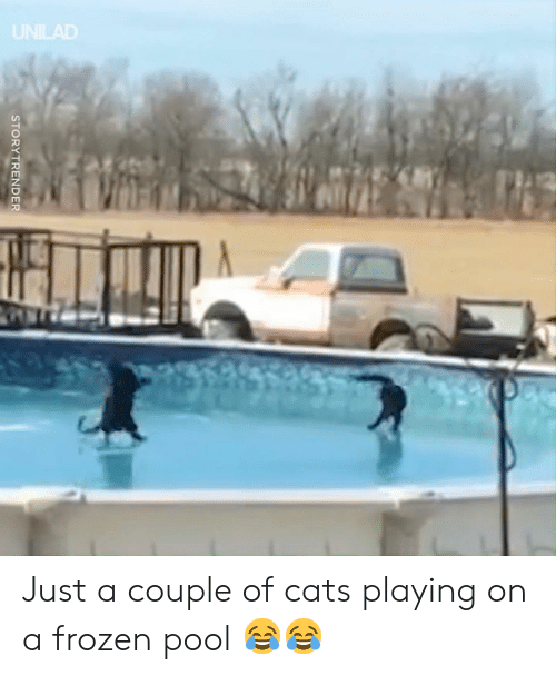 Cats, Dank, and Frozen: STORYTRENDER Just a couple of cats playing on a frozen pool 😂😂