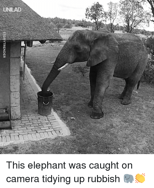 Dank, Camera, and Elephant: STORYTRENDER This elephant was caught on camera tidying up rubbish 🐘👏