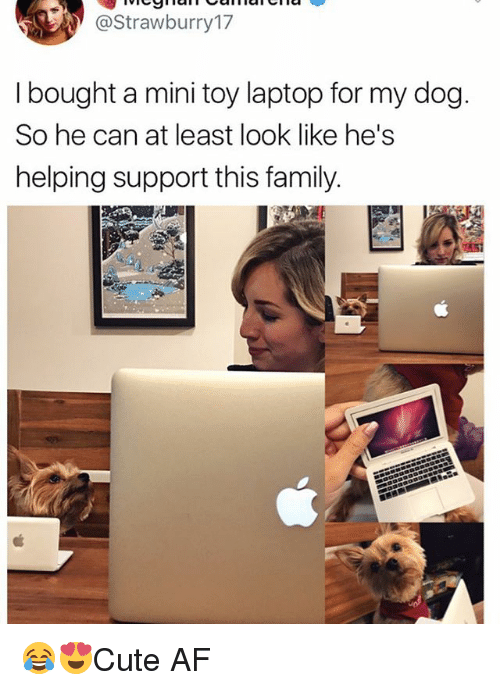 Af, Family, and Memes: @Strawburry17  I bought a mini toy laptop for my dog  So he can at least look like he's  helping support this family 😂😍Cute AF