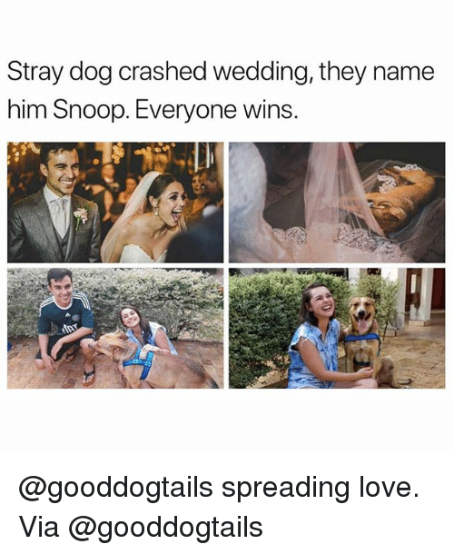 Love, Memes, and Snoop: Stray dog crashed wedding, they name  him Snoop. Everyone wins. @gooddogtails spreading love. Via @gooddogtails