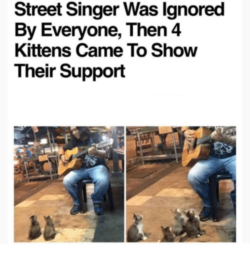 Kittens, Singer, and Show: Street Singer Was lgnored  By Everyone, Then 4  Kittens Came To Show  Their Support