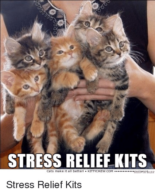 Image result for stress relief kitty meme
