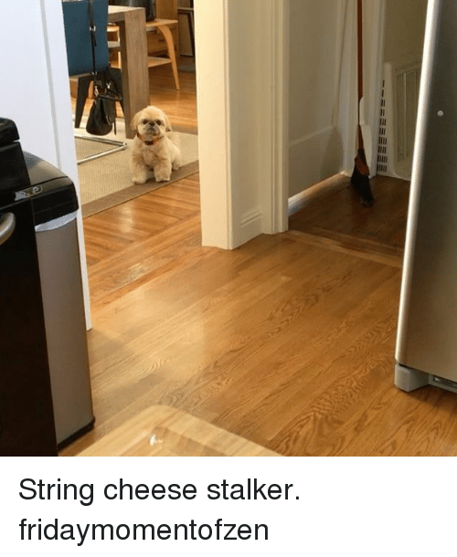 Memes, Stalker, and 🤖: String cheese stalker. fridaymomentofzen