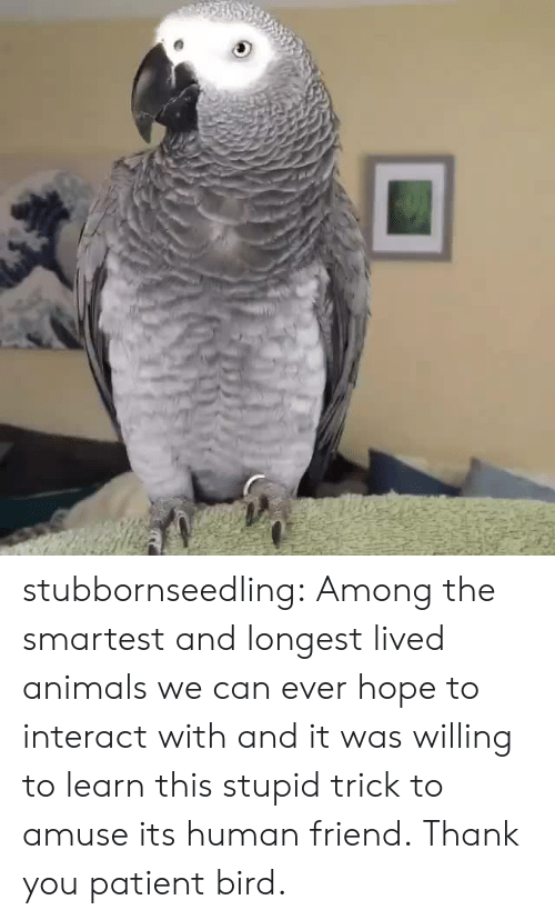 Animals, Target, and Tumblr: stubbornseedling: Among the smartest and longest lived animals we can ever hope to interact with and it was willing to learn this stupid trick to amuse its human friend. Thank you patient bird.