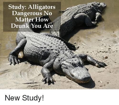 Drunk, Funny, and Alligator: Study: Alligators  Dangerous No  Matter How  Drunk You Are New Study!