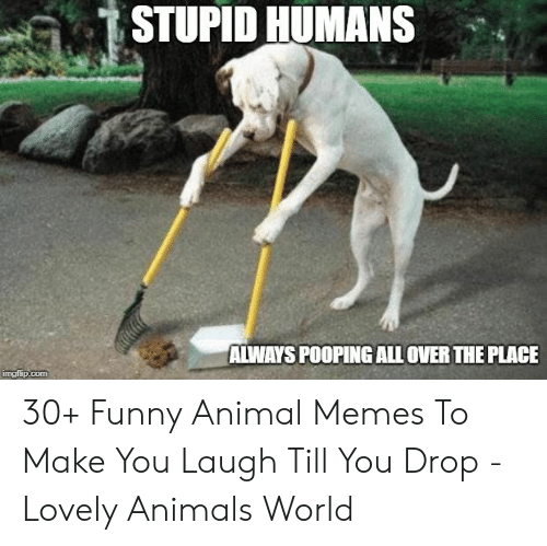 Stupid Humans Always Pooping All Over The Place Imgiupcom 30 Funny Animal Memes To Make You Laugh Till You Drop Lovely Animals World Animals Meme On Me Me,Restaurant Decorating Ideas Valentines Decoration