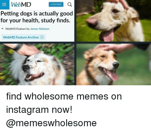 webMD, Health, and Web: SUBSCRIBE  a  Web  MD  Petting dogs is actually good  for your health, study finds.  WebMD Feature by James Nielssen  WebMD Feature Archive 1 find wholesome memes on instagram now! @memeswholesome