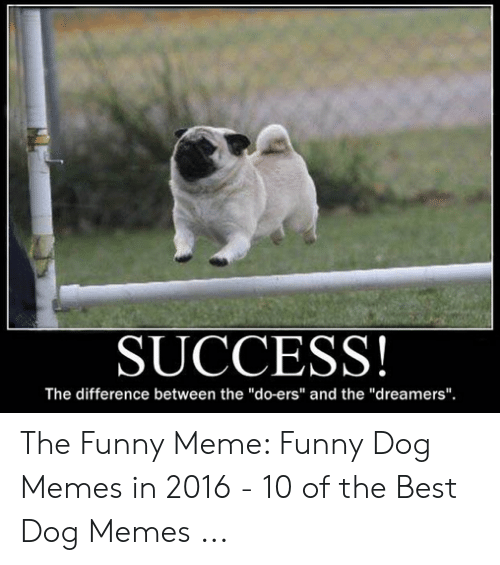 Success The Difference Between The Do Ers And The Dreamers The Funny Meme Funny Dog Memes In 2016 10 Of The Best Dog Memes Funny Meme On Me Me