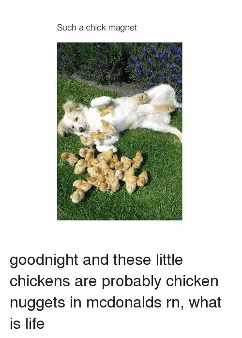 Life, McDonalds, and Chicken: Such a chick magnet goodnight and these little chickens are probably chicken nuggets in mcdonalds rn, what is life