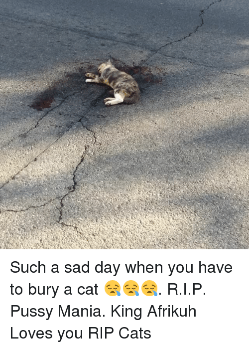 Such a Sad Day When You Have to Bury a Cat 😪😪😪 RIP Pussy