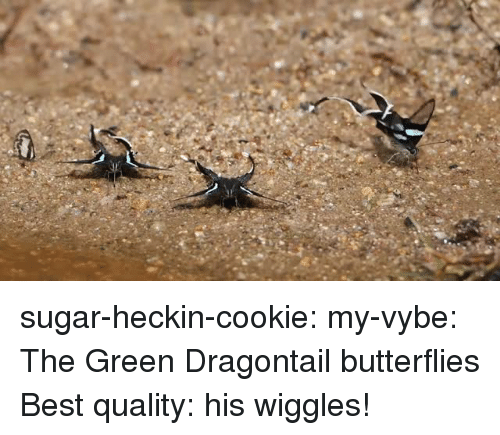 Target, Tumblr, and Best: sugar-heckin-cookie:  my-vybe:   The Green Dragontail butterflies   Best quality: his wiggles!