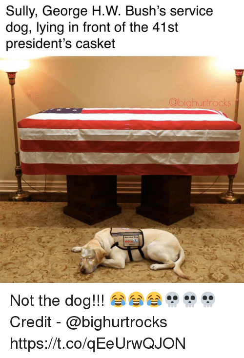 Presidents, Lying, and Dog: Sully, George H.W. Bush's service  dog, lying in front of the 41st  president's casket  hurtrocks Not the dog!!! 😂😂😂💀💀💀  Credit - @bighurtrocks https://t.co/qEeUrwQJON