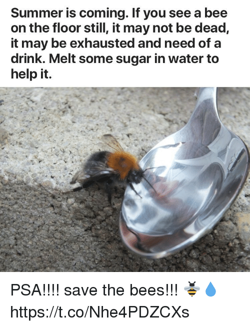 Summer, Help, and Sugar: Summer is coming. If you see a bee  on the floor still, it may not be dead,  it may be exhausted and need of a  drink. Melt some sugar in water to  help it. PSA!!!! save the bees!!! 🐝💧 https://t.co/Nhe4PDZCXs