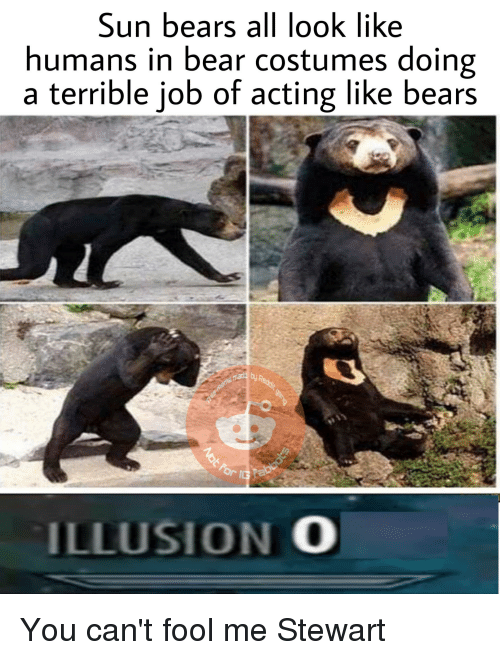 Reddit, Bear, and Bears: Sun bears all look like  humans in bear costumes doing  a terrible job of acting like bears  ILLUSION O