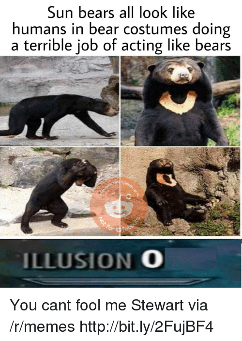 Memes, Bear, and Bears: Sun bears all look like  humans in bear costumes doing  a terrible job of acting like bears  ILLUSION O You cant fool me Stewart via /r/memes http://bit.ly/2FujBF4
