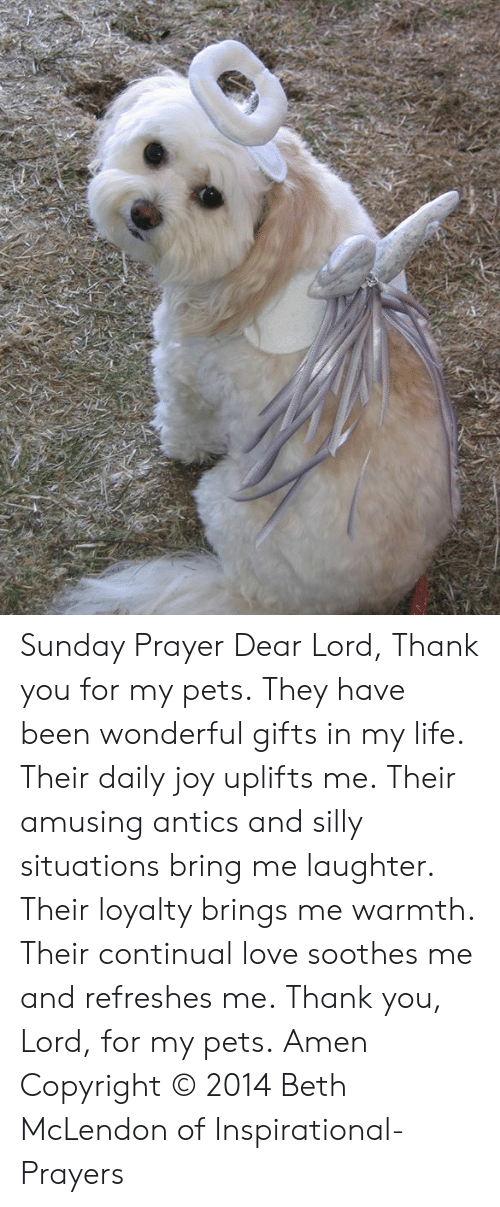 Life, Love, and Memes: Sunday Prayer  Dear Lord,  Thank you for my pets.  They have been wonderful gifts in my life.  Their daily joy uplifts me.  Their amusing antics and silly situations bring me laughter.   Their loyalty brings me warmth.  Their continual love soothes me and refreshes me.  Thank you, Lord, for my pets.  Amen  Copyright © 2014 Beth McLendon of Inspirational-Prayers
