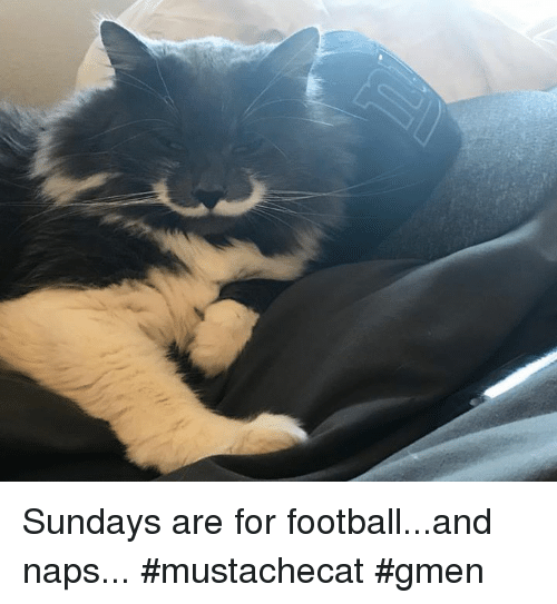 Memes, 🤖, and Nap: Sundays are for football...and naps... #mustachecat #gmen