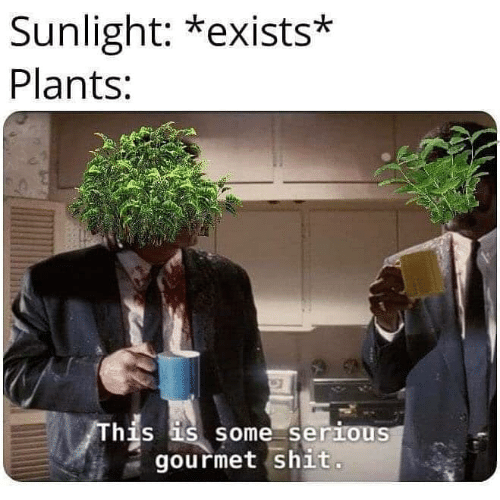 Funny, Shit, and Sunlight: Sunlight: *exists*  Plants:  his is some serious  gourmet shit.