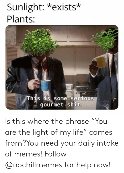 "Life, Memes, and Shit: Sunlight: *exists*  Plants:  hjs  s some serious  gourmet shit. Is this where the phrase ""You are the light of my life"" comes from?You need your daily intake of memes! Follow @nochillmemes for help now!"