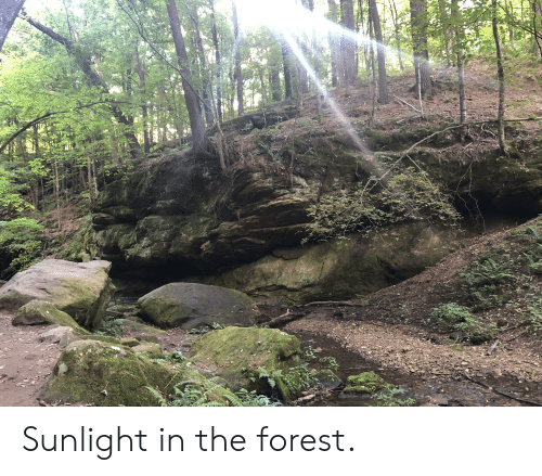 The Forest, Forest, and Sunlight: Sunlight in the forest.