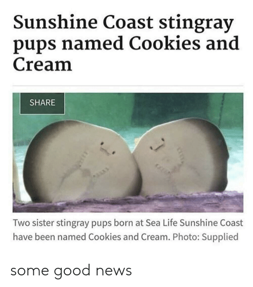 Cookies, Life, and News: Sunshine Coast stingray  pups named Cookies and  Cream  SHARE  Two sister stingray pups born at Sea Life Sunshine Coast  have been named Cookies and Cream. Photo: Supplied some good news