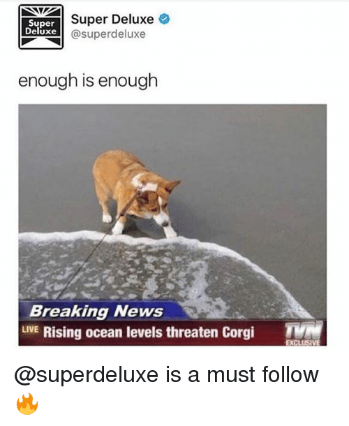Corgi, Funny, and News: Super Deluxe  Super  Deluxe  Super deluxe  enough is enough  Breaking News  LIVE  Rising ocean levels threaten Corgi  TMM  EXCLUS @superdeluxe is a must follow 🔥