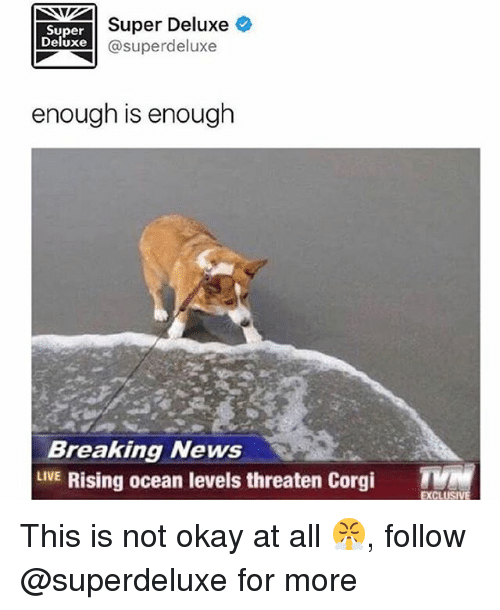 Corgi, Memes, and News: Super  Deluxe  Super Deluxe  @superdeluxe  enough is enough  Breaking News  LVE Rising ocean levels threaten Corgi T  EXCL This is not okay at all 😤, follow @superdeluxe for more