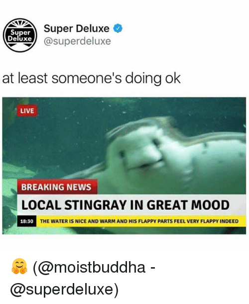 Memes, Mood, and News: Super  Deluxe )  Super Deluxe  xe@superdeluxe  at least someone's doing ok  LIVE  BREAKING NEWS  LOCAL STINGRAY IN GREAT MOOD  18:30  THE WATER IS NICE AND WARM AND HIS FLAPPY PARTS FEEL VERY FLAPPY INDEED 🤗 (@moistbuddha - @superdeluxe)