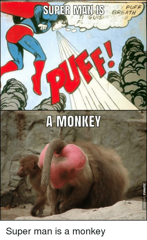 Super funny monkeys sorry