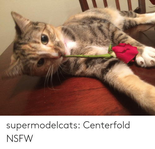 Nsfw, Tumblr, and Blog: supermodelcats:  Centerfold NSFW