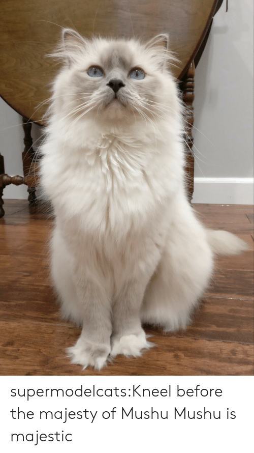 Tumblr, Blog, and Com: supermodelcats:Kneel before the majesty of Mushu Mushu is majestic