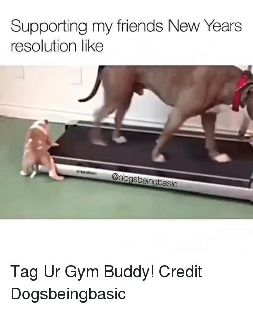 Gym, Memes, and New Year's Resolutions: Supporting my friends New Years  resolution like  @dogsbeingbasic Tag Ur Gym Buddy!  Credit Dogsbeingbasic