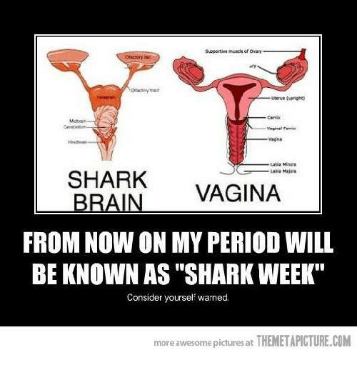 25 best memes about sharks brain sharks brain memes memes shark and sharks supportive muscle of ovan latia minera shark brain vagina from now on my period will be known as shark week consider yourself ccuart Gallery