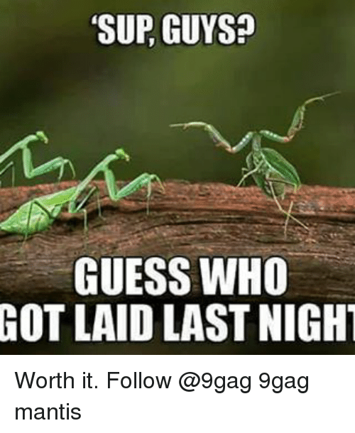 Memes, 🤖, and Last Night: SUR GUYS?  GUESS WHO  GOT LAID LAST NIGHT Worth it. Follow @9gag 9gag mantis