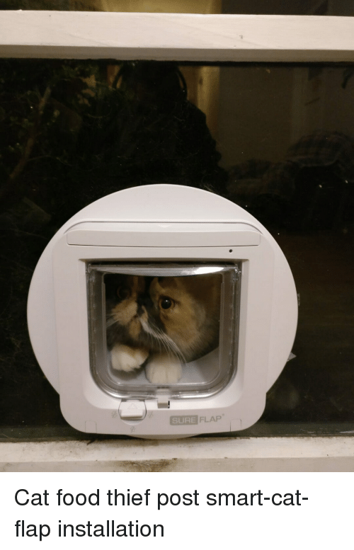 Food, Thief, and Cat: SURE FLAP