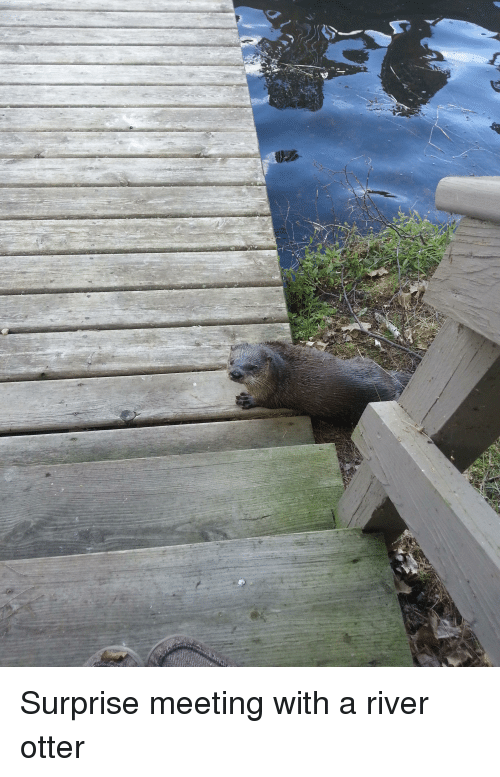 River, Otter, and River Otter