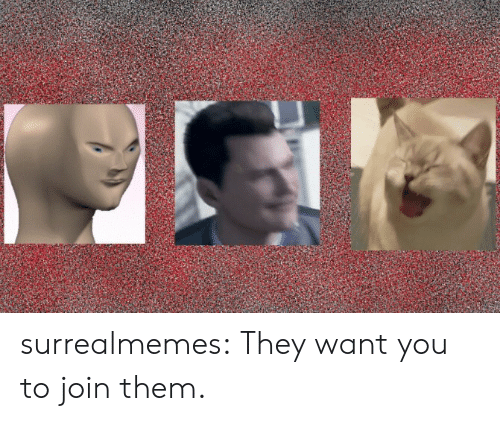 Memes, Tumblr, and Blog: surrealmemes:  They want you to join them.