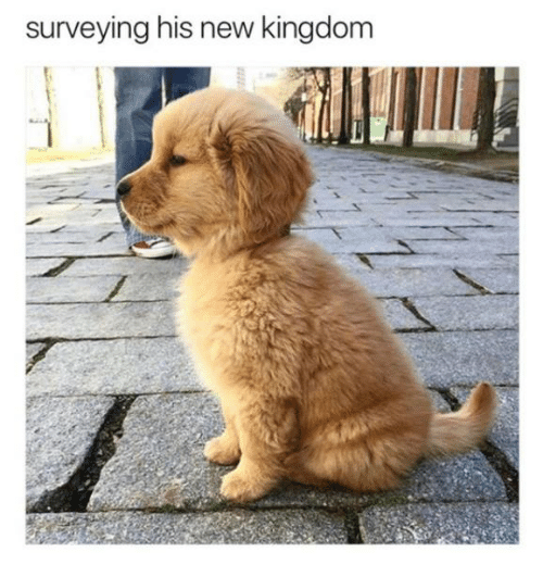 Dank, 🤖, and Kingdom: surveying his new kingdom