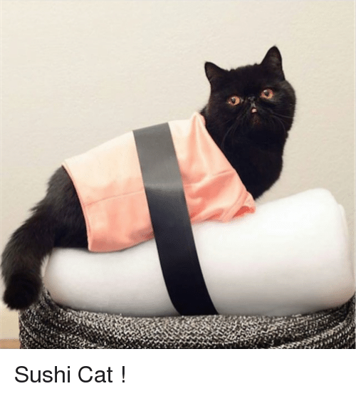 Sushi Cat Meme On Meme