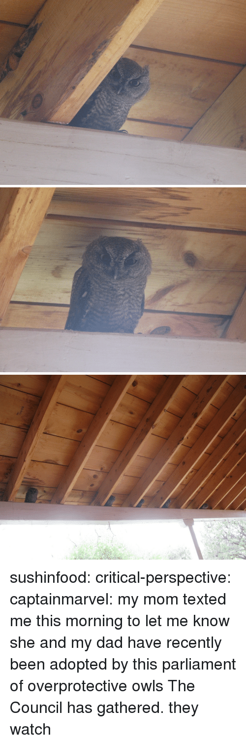 Dad, Tumblr, and Blog: sushinfood:  critical-perspective:  captainmarvel:  my mom texted me this morning to let me know she and my dad have recently been adopted by this parliament of overprotective owls  The Council has gathered.  they watch