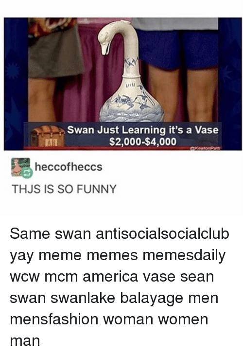 Swan Just Learning It S A Vase 2000 4000 Heccofheccs Thjs Is So Funny Same Swan Antisocialsocialclub Yay Meme Memes Memesdaily Wcw Mcm America Vase Sean Swan Swanlake Balayage Men Mensfashion Woman Women Man Collection by bird on it • last updated 9 days ago. meme