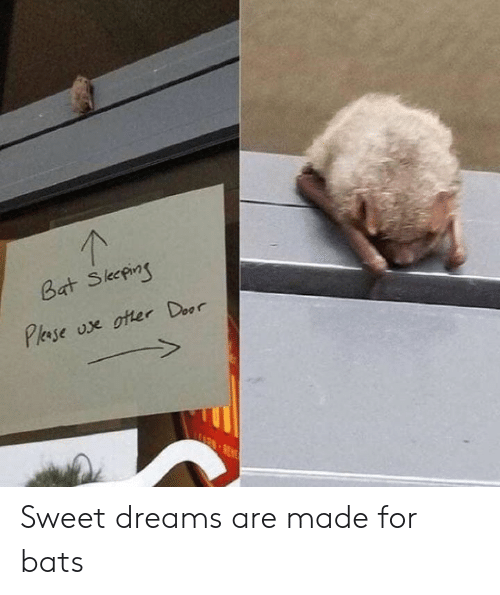Dank, Dreams, and 🤖: Sweet dreams are made for bats