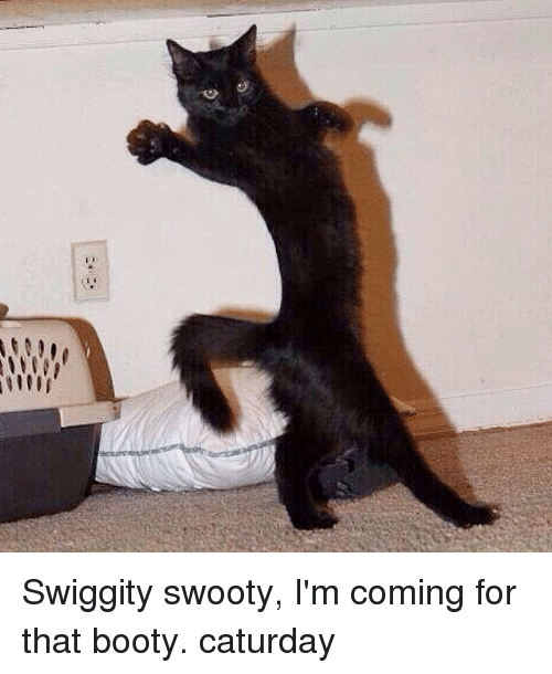 Swiggity Swooty I M Coming For That Booty Caturday Booty Meme On Me Me Firegrown, cat_in_dreamland, fairandnoble, nanayoung, pipi25mon, papercute, eden_sinclair, ittybittydice, devil_jin, aneszto, noirweiss, mslilly, anielka, shionite, maiwing, feldlerche, na_luci. that booty caturday booty meme
