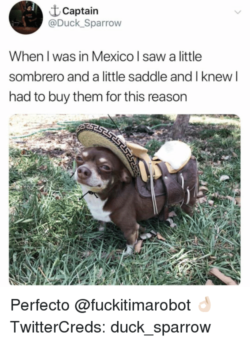 Funny, Saw, and Duck: t Captain  @Duck_Sparrow  When l was in Mexico l saw a little  sombrero and a little saddle and I knew l  had to buy them for this reason Perfecto @fuckitimarobot 👌🏻 TwitterCreds: duck_sparrow