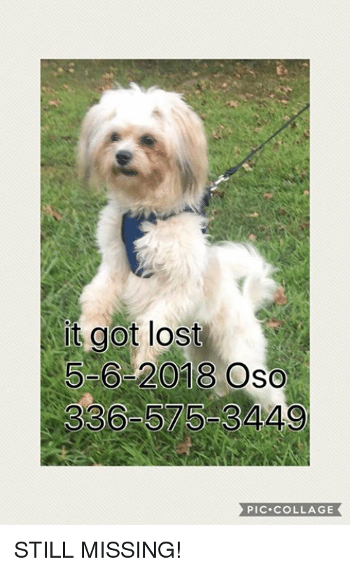 Memes, Lost, and Collage: t got lost  5-6-2018 Oso  336 575-3449  PIC.COLLAGE STILL MISSING!