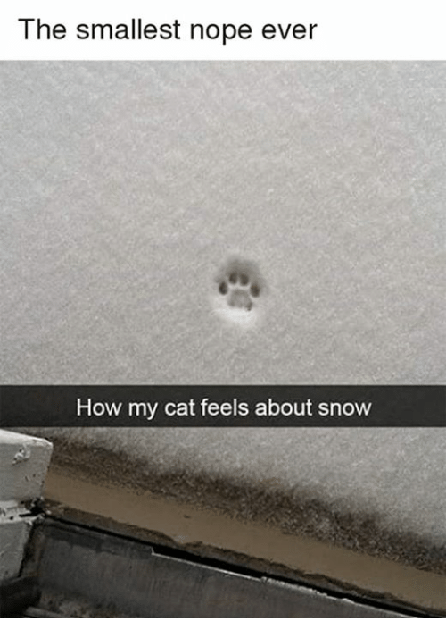Dank, Snow, and Nope: T he smallest nope ever  How my cat feels about snow